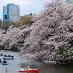 アメリカ在住者が日本帰国時に、「やっぱり日本って良い!!」とつくづく思う10の事